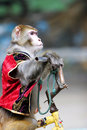 Monkey cycling  of circus Stock Photo