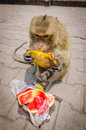 Monkey eating at phra prang sam yot at lop buri thailand Royalty Free Stock Image