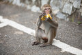 Monkey eats banana Stock Photo