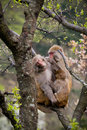 Monkey family Royalty Free Stock Photos