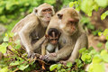 Monkey family animal in the rainforest Royalty Free Stock Images