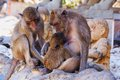 Monkey family of monkeys sitting beside statues of children Stock Image