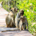 Monkey Family In Nature