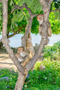 Monkey family sitting on a tree in a jungle on a beach sea view