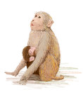 Monkey feeding newborn baby hand drawn illustration of the Royalty Free Stock Images