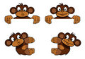 Monkey frame decoration Stock Photos