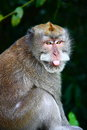 Monkey with funny face the closeup of Stock Images
