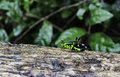 Monkey grasshoppers on the tree in the forest thailand Stock Image