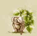 Monkey and green tropical plant background with Royalty Free Stock Photos