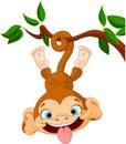 Monkey hamming