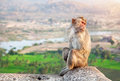 Monkey in hampi sitting at hanuman temple near ruins of vijayanagara empire karnataka india Royalty Free Stock Photos