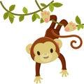 Monkey hanging on a liana