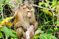 Monkey at Khao Yai National Park Stock Photography