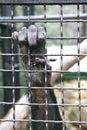Monkey las barras que asen de la mano Imagen de archivo
