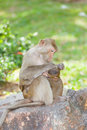 The Monkey  Long-Tailed Macaque  is take care Royalty Free Stock Image