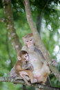 Monkey mom cuddle her child Royalty Free Stock Photo