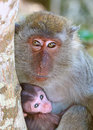 Monkey mother Royalty Free Stock Image