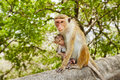 Monkey mother with baby Royalty Free Stock Photo
