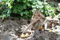 Monkey In Nature