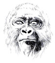 Monkey painting of anthropoid on white background Royalty Free Stock Images