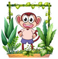 A monkey with a pink shirt illustration of on white background Stock Photography