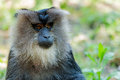 Monkey portrait Royalty Free Stock Photo