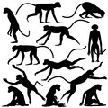 Monkey poses set of editable vector silhouettes of langur monkeys in different Stock Photo