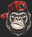 Monkey`s head in a baseball cap Royalty Free Stock Photo
