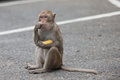 Monkey sits and eats the on asphalt in park banana Royalty Free Stock Image