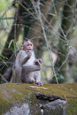 A monkey sits on the edge Stock Photography