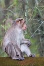 A monkey sits on the edge Royalty Free Stock Images
