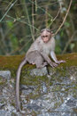 A monkey sits on the edge Royalty Free Stock Image