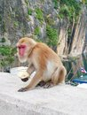 Monkey sits on edge of dam in thailand Royalty Free Stock Image