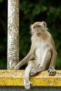 Monkey sitting at a railing Royalty Free Stock Images