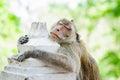 Monkey sleep,