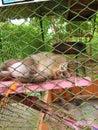 Monkey is sleeping in the enclosure