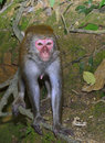 The monkey is staring at you Stock Photography