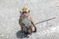 Monkey in the street a sits on Royalty Free Stock Photos