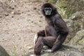Title: Monkey at Taipei Zoo