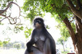 Monkey thai asia in ourdoor Stock Photos