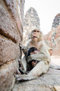 Monkey two sitting and mom love her baby Royalty Free Stock Image