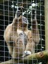 Monkey2 Stock Image