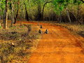 Monkeys on Jungle Path Royalty Free Stock Photo
