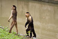 Monkeys in Parque Historico, cultural and