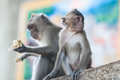 Monkeys at Tiger Cave Temple Royalty Free Stock Photo