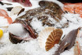 Monkfish on market display with ice in its mouth Royalty Free Stock Image