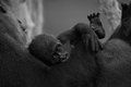 Mono baby gorilla being held by mother Royalty Free Stock Photo