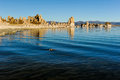 Mono lake tufa formations at sunrise rise out of the water and ground Stock Photography