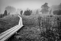 Monochromatic landscape with swedish marsh scenery of footpath through the Stock Photography