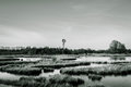 Monochromatic marshy landscape shot of a in a natural reserve in germany Royalty Free Stock Image